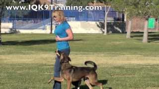 Iq K9 Training | Carlsbad Dog Training - Happy, Awesome Off-leash Dog Training At The Park!