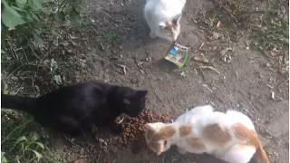 Видео в поддержку бездомных животных