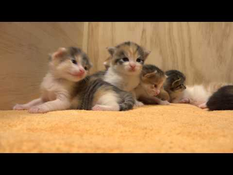 14 Kittens -- Live Out of the Kitten-Box