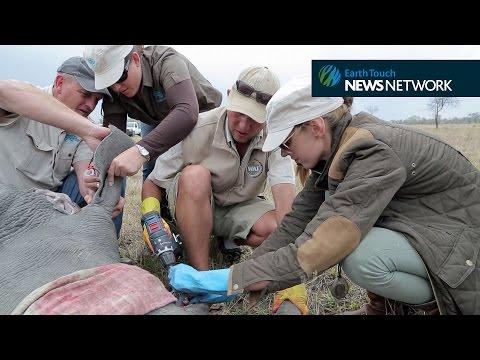 A World Rhino Day tribute to wildlife heroes
