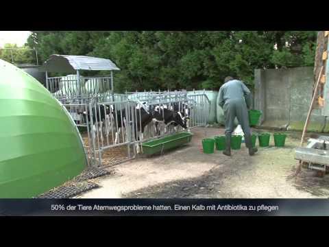 Témoignage client : Benoît Colboc, éleveur agriculteur à Villainville (76) - Niche à veaux IGLOO