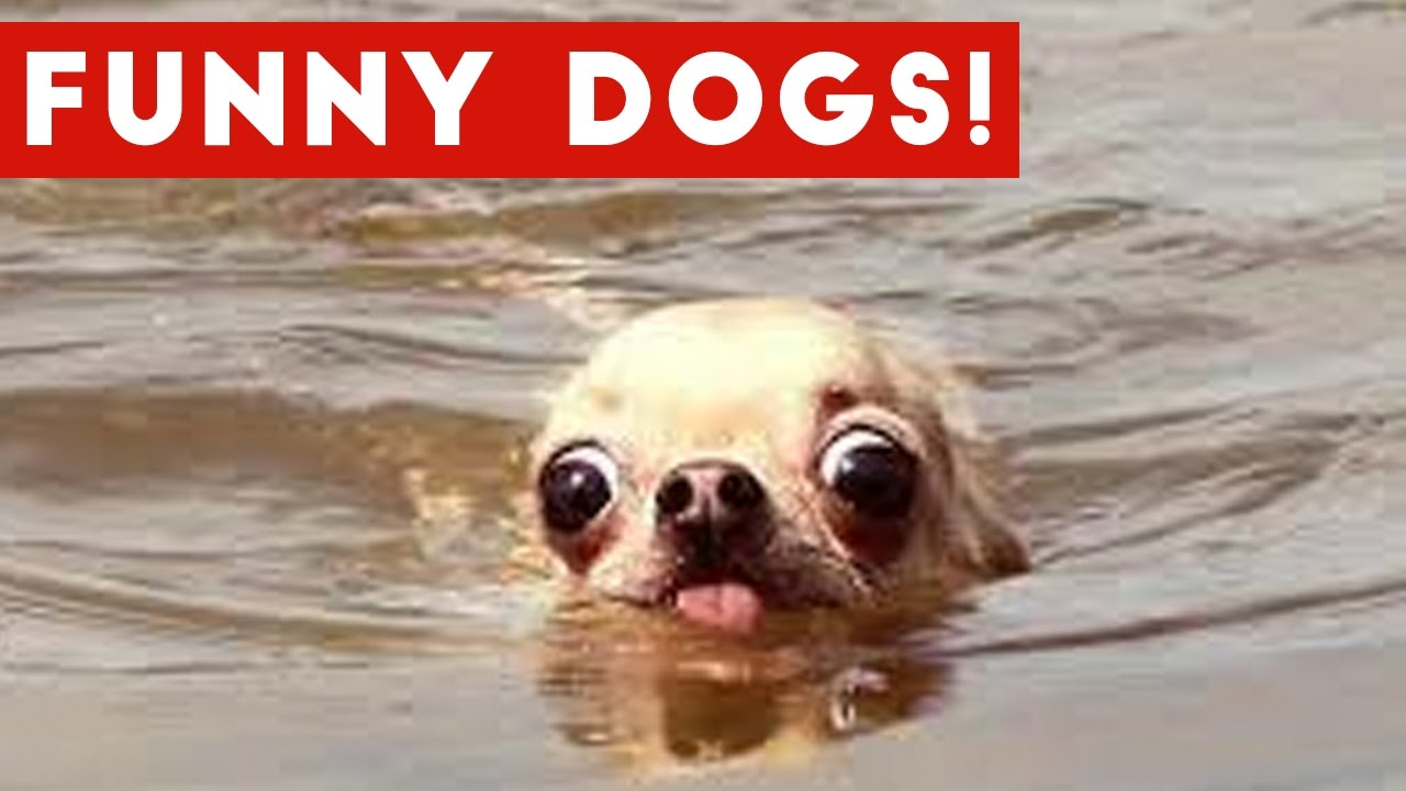 Image of: Funniest Smiling funnypetvideso fpv animals Youtube Top 50 Funny Dog Videos That Are Guaranteed To Make You Smile