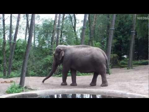 Burger's Zoo Arnheim (Holland) - Tierpark Arnhem Niederlande