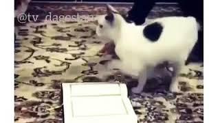 Кошка не наступает на коран😨