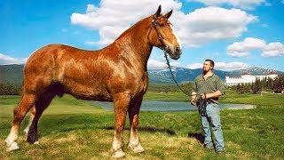 10 Shockingly Large Animals That Actually Exist