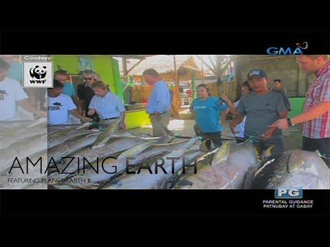 Amazing Earth: Philippines' Tuna production - 동영상