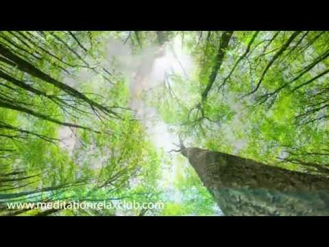 Into the Woods: 8 hours Long Relaxation Music Video Nature Sounds