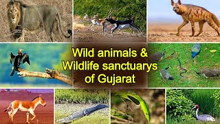 Amazing Wild animals & Great wildlife sanctuary in Gujarat देखिये अनोखे वन्य प्राणी & गुजरात के जंगल