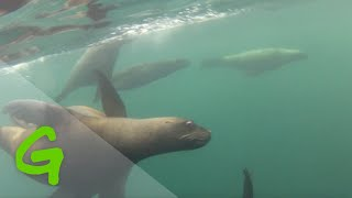Serenity Segment: Swimming with Seals