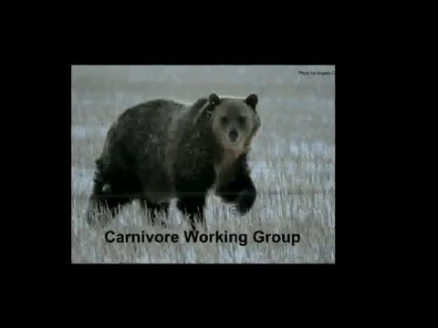 'Sharing the Range' - The Waterton Biosphere Association and the Blackfoot Challenge