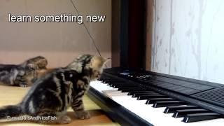 sims посмотреть видео с кошками