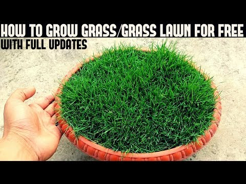 how to grow grass from seed