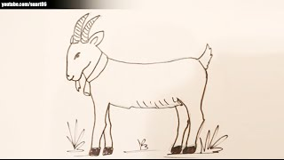 Como dibujar una cabra
