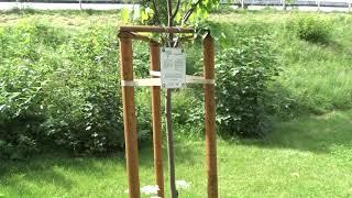 Strom esperanto v Liptovskom Hrádku