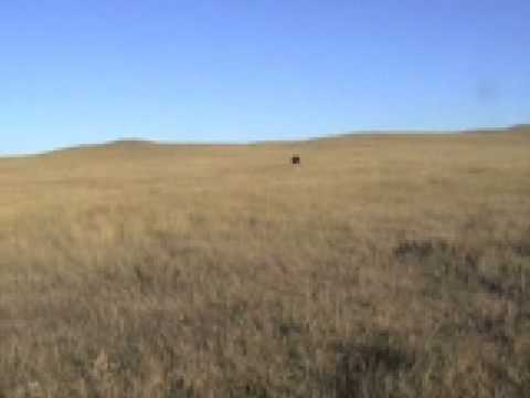 buffalo hunting south dakota