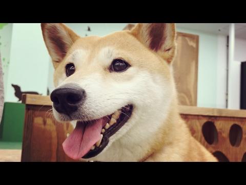 ド緊張の室内ドッグランデビュー The Indoor dog run