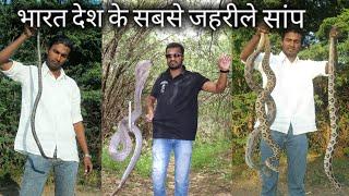 यही है वो 4 जहरीले सांप, जो अक्सर इसके ही काटे जाने पर लोगों की मौत होती है, Most venomous snake