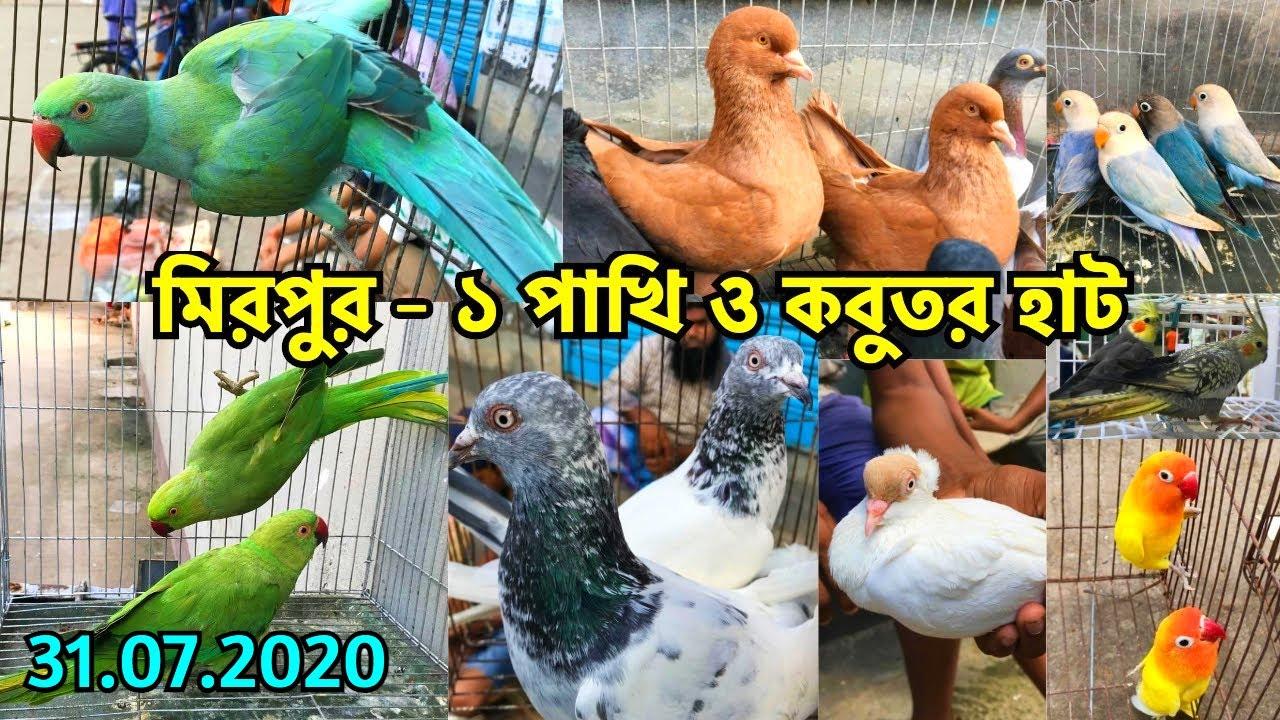 ঈদের শেষ মিরপুর - ১ হাটে পাখি ও কবুতরের দাম জানুন   মিরপুর - ১ হাট   Mirpur - 1 Pet Market (V - 123)