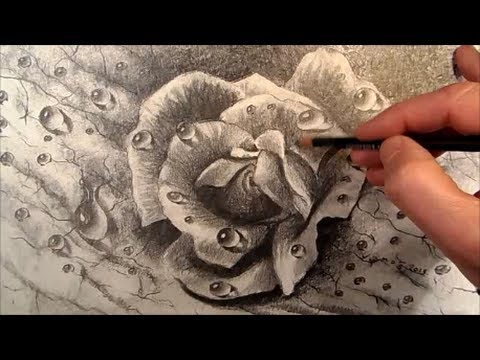 Dewdrops How To Draw A Realistic Rose Youtube