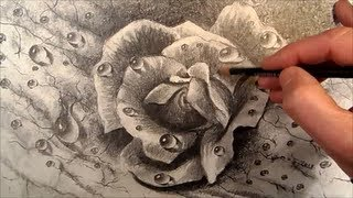 Dewdrops, How to Draw a Realistic Rose