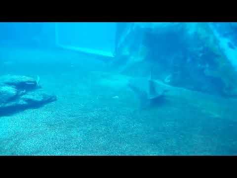 Baby Sharks in the Durban Aquarium