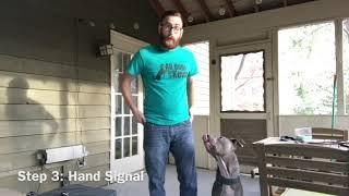 How Do I Teach My Dog To Finish?