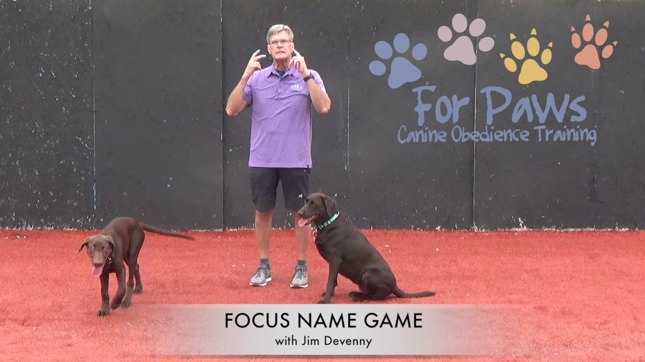Four Paws | Canine obedience Training and Pet Sitting