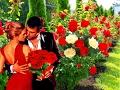дарю я розы тебе вновь на них