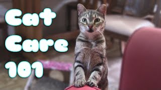 HOW TO CARE FOR A CAT or KITTEN! (101 EVERYTHING YOU NEED TO KNOW) Pet Care