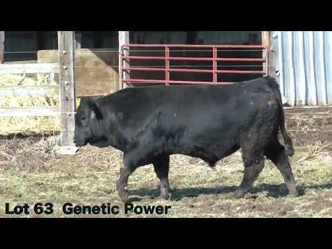 Lot 63 E807 JBarM Genetic Power