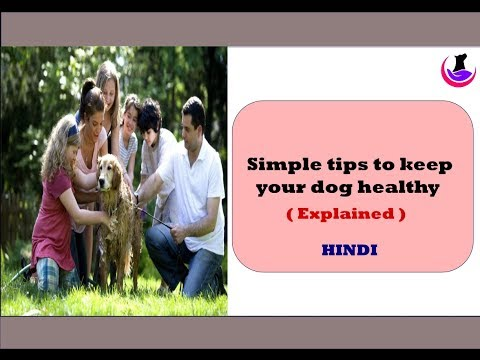Simple tips to keep your dog healthy ( in Hindi )