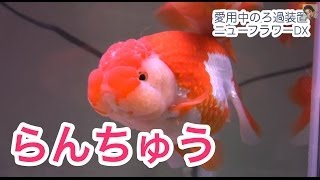 Repeat youtube video 水作エイト ニューフラワーDX