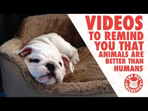 9 Videos To Remind You That Animals Are Better Than Humans