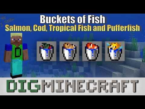 Buckets of Fish (Salmon, Cod, Tropical Fish and Pufferfish ...