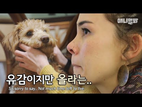 우릴 기억하는 사람들이 있을까요?ㅣDo You Remeber Dogs Abandoned in Desert Island? thumbnail