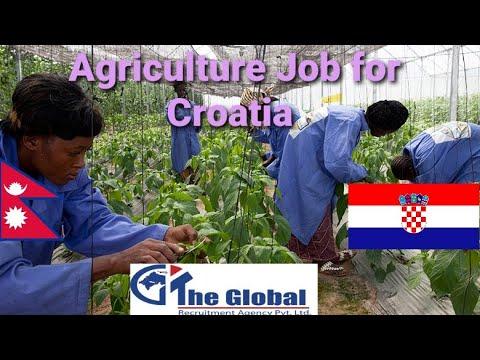 Croatia 🇭🇷 Agriculture Work Details...