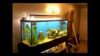 Diy Fish Tank Canopy