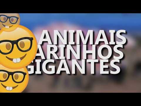 TOP 10 ANIMAIS MARINHOS GIGANTES - TOP 10 GIANT MARINE ANIMALS