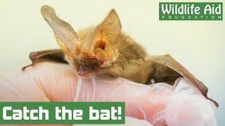 Cheeky bat causes havoc in bathroom!