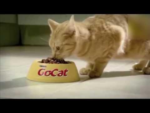 МЕГА прикольные рекламы с кошками!!!
