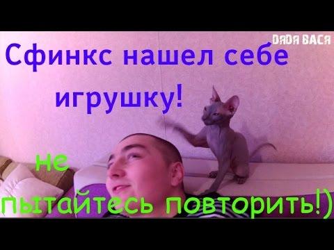 кошка и кот уход