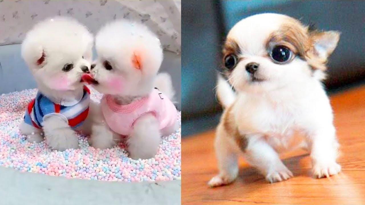 Animais engraçados 2020 - Cães fofos fazendo coisas engraçadas #2 | Cães engraçados