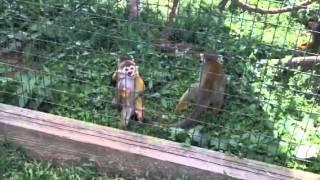 Cute Monkey at Virginia Safari Park
