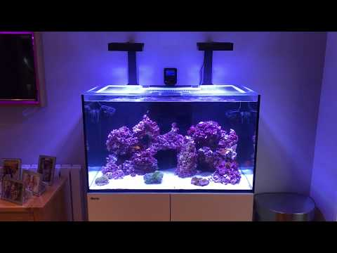 My Reefer 250 finally cycled!