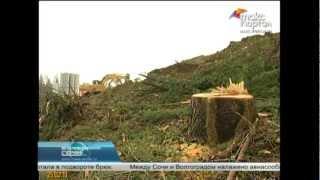 Незаконный спил деревьев в Сочи приостановлен(, 2013-02-25T15:31:36.000Z)