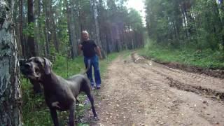 Собаки Баскервилей