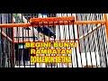 Rambatan Doraemon Betina  Mp3 - Mp4 Download