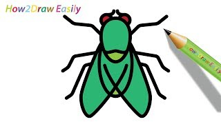 How to Draw a Fly   Easy Drawing - Coloring