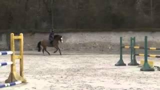 twist de pleville,cheval a vendre par Berlin x quidam de revel(souche Eve des etisses)
