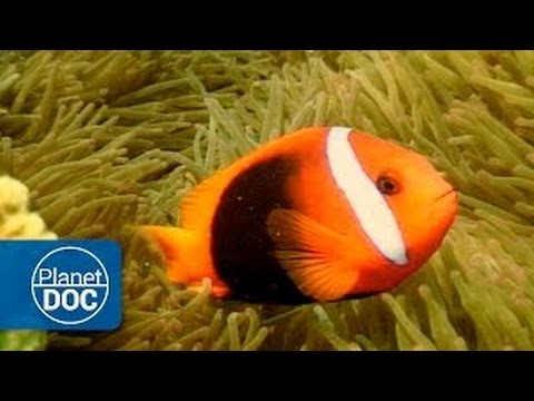Australia | Coral Reef